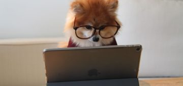 dog in glasses researching computer science degree