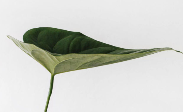leaf structure studied with an environmental science degree